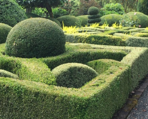 Natural green Boxwood Garden, Topiary, Hedges
