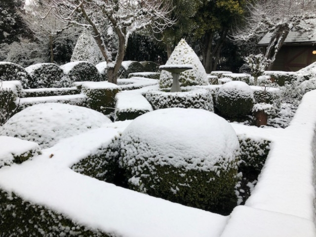Boxwood Garden crowned with snow